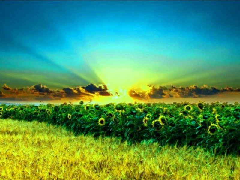 Ukraine agriculture
