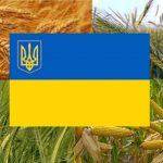 Прапор України на фоні основних зернових культур в країні
