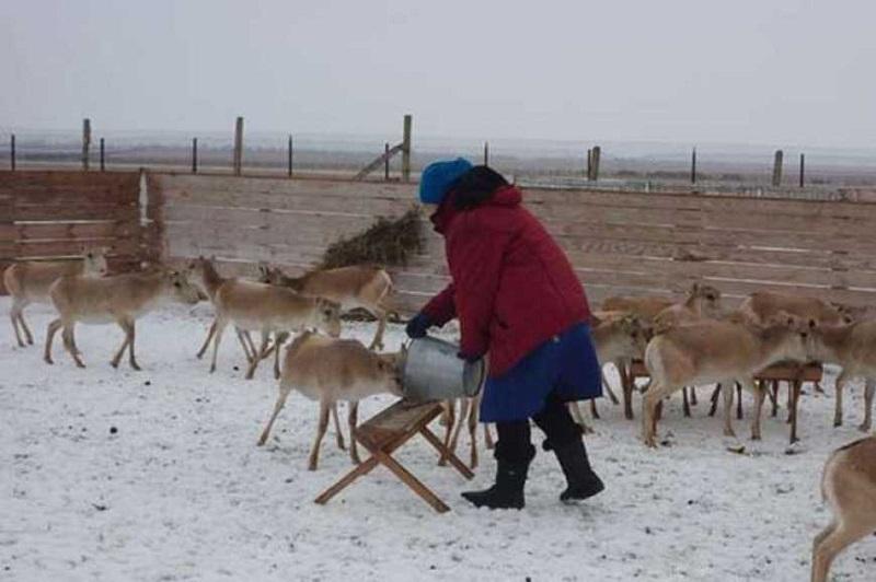 Китайці будуть розводити антилоп в Україні й експортувати їх до Китаю
