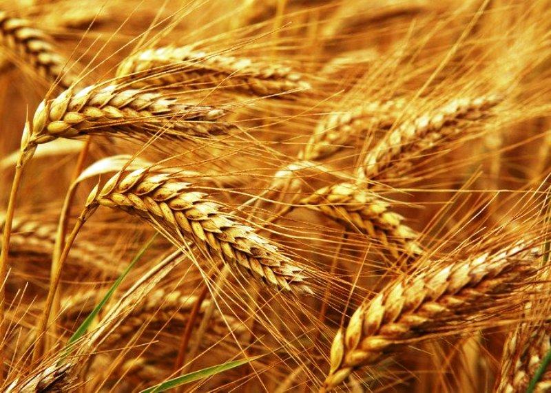 Експорт зерна України до країн Азії